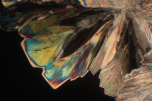 White sugar crystal under polarized light microscope